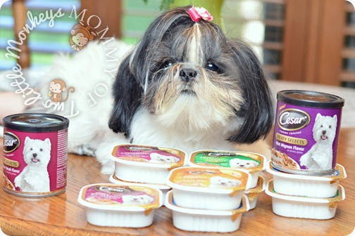 shih tzu dog with food