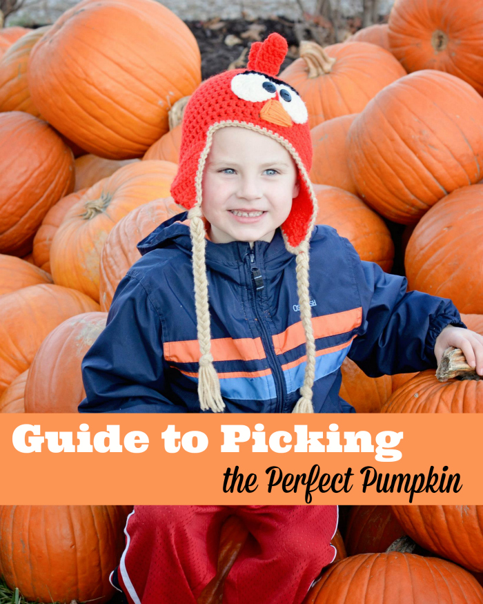 Picking the Perfect Pumpkin | Family Road Trip Ideas