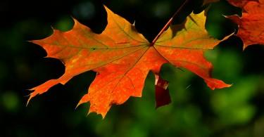 autumn-196566_1280