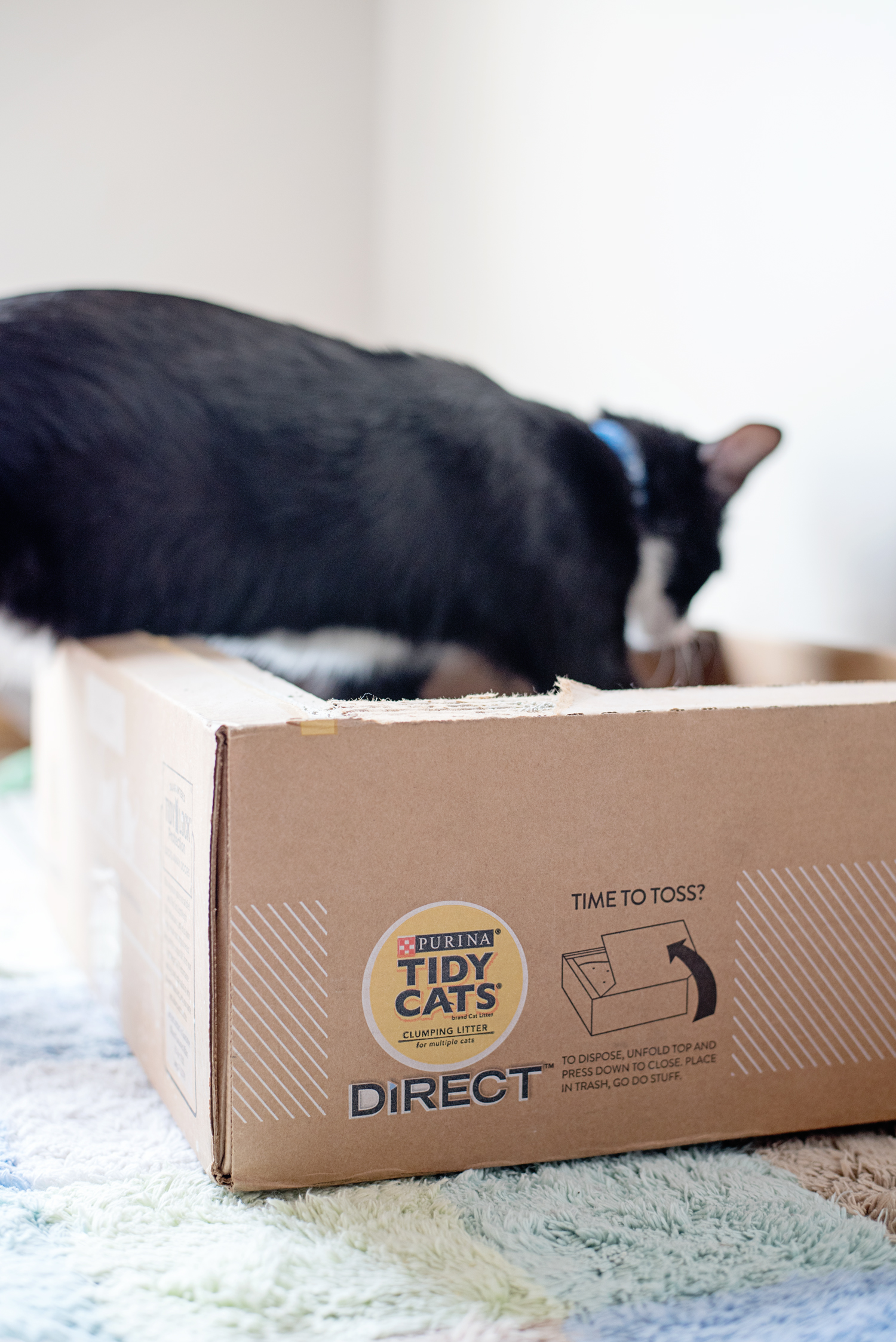 Simplify Your Cat Litter Routine with Tidy Cats Direct